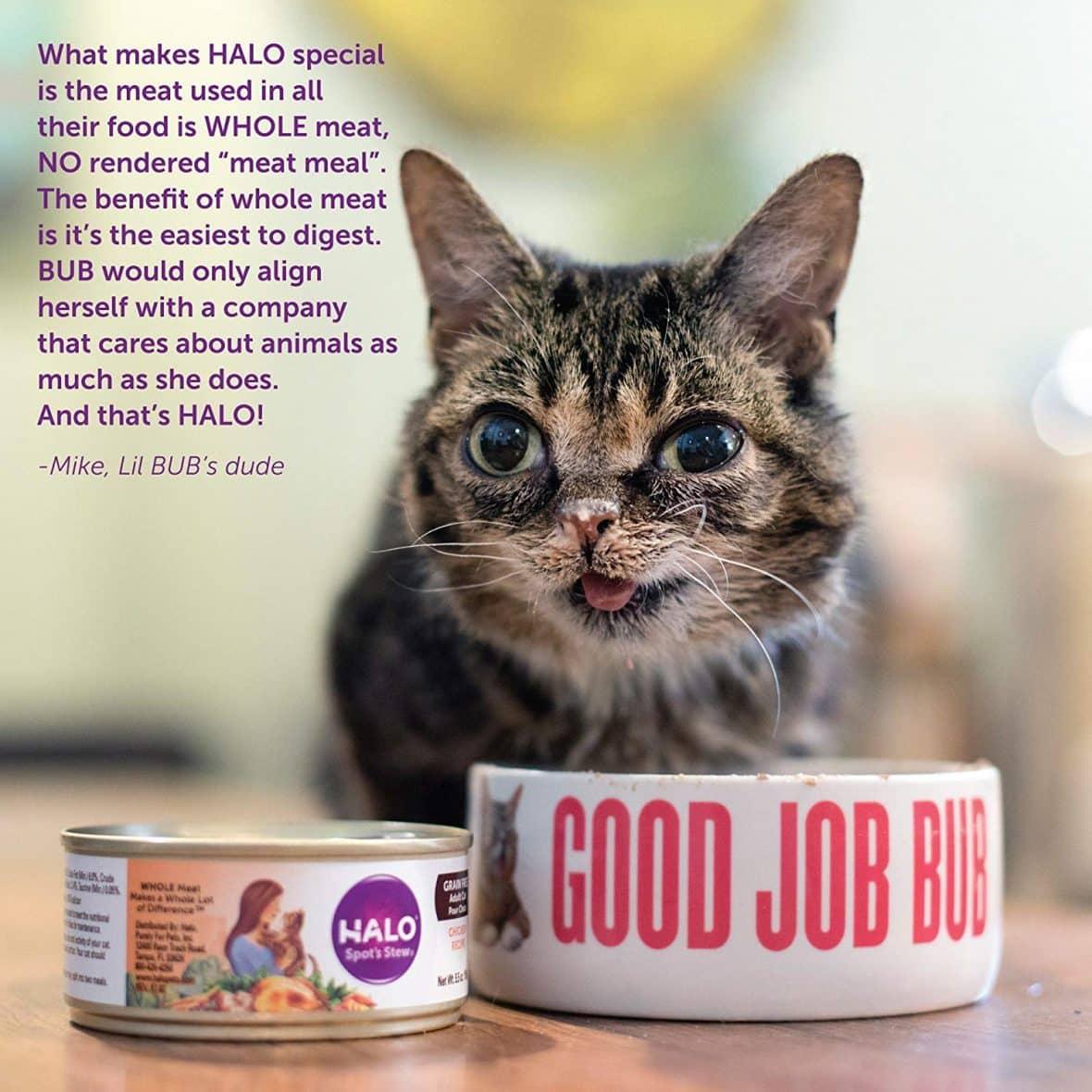 Free-Halo-Cat-Food-