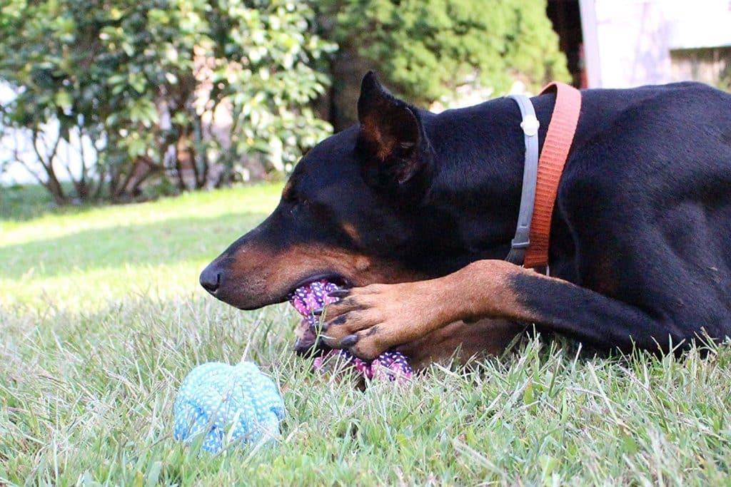 8-Dog-Toys-Amaozn-Deal