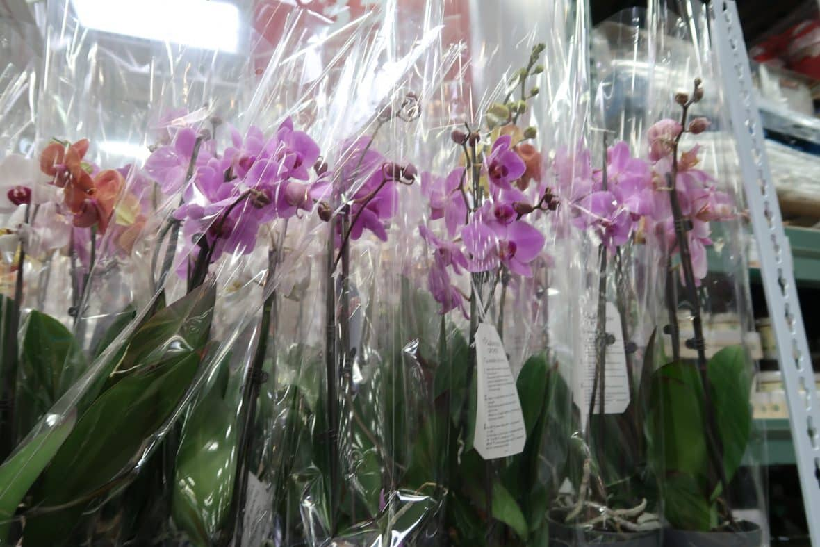orchids at BJs wholesale club