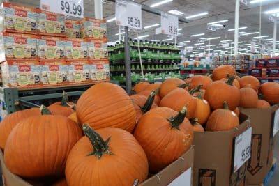pumpkins at bjs wholesale