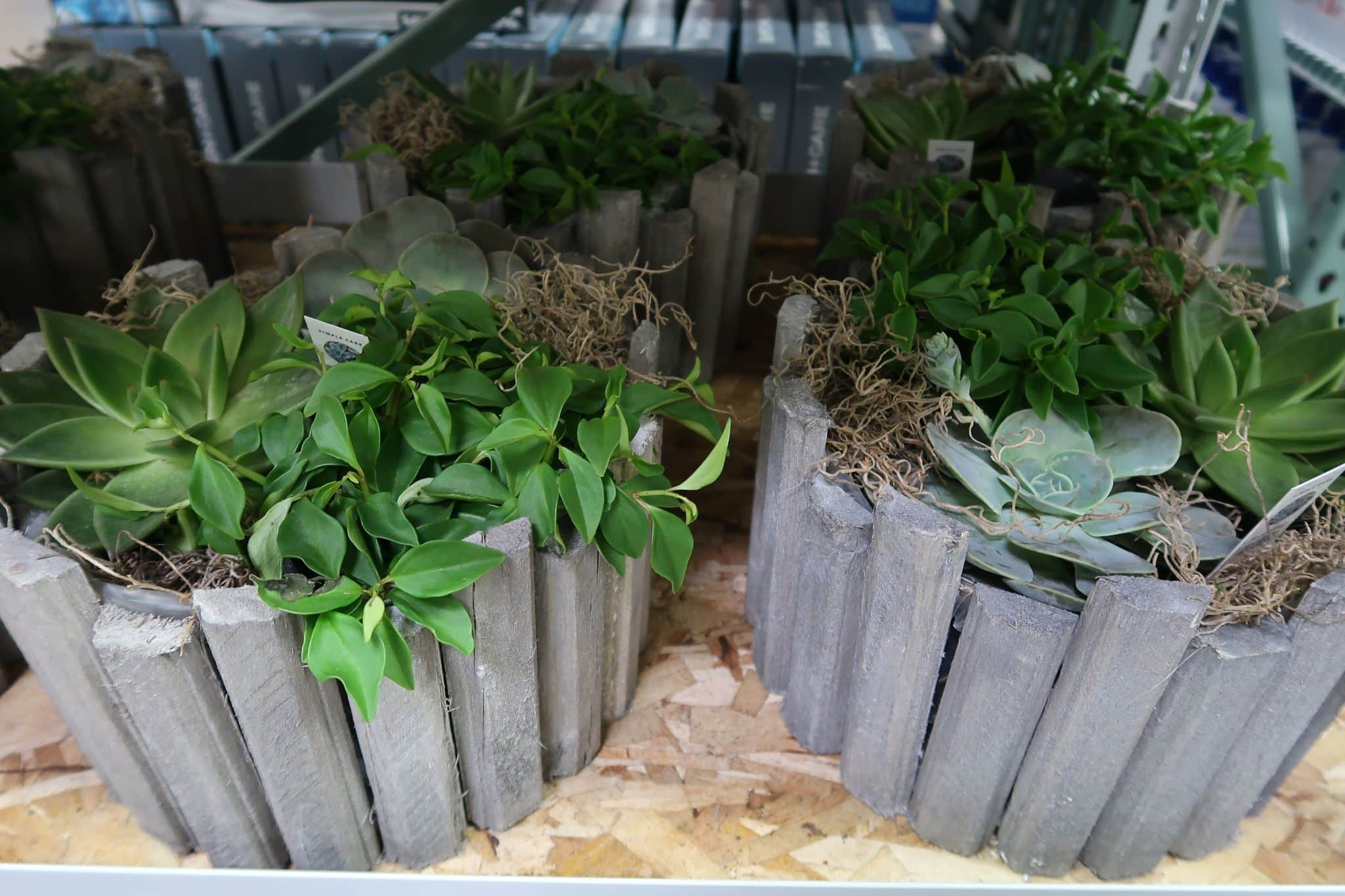Succulent Garden Planters Are Back! $19.99